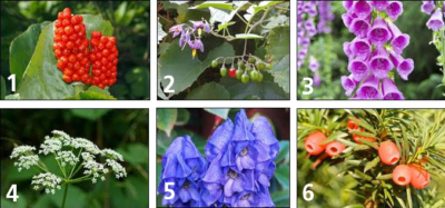 Poisonous garden plants